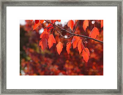 Framed Print featuring the photograph Autumn Leaves In Medford by Mick Anderson