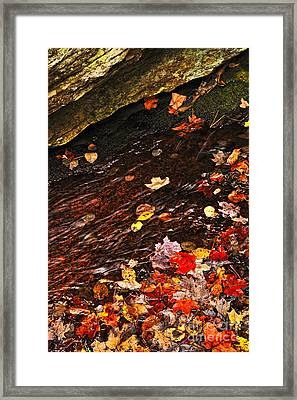 Autumn Leaves In River Framed Print by Elena Elisseeva