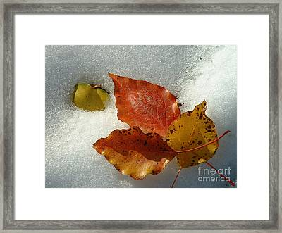 Autumn Leaves In Snow Framed Print