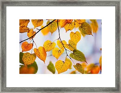 Autumn Leaves Framed Print by Jenny Rainbow