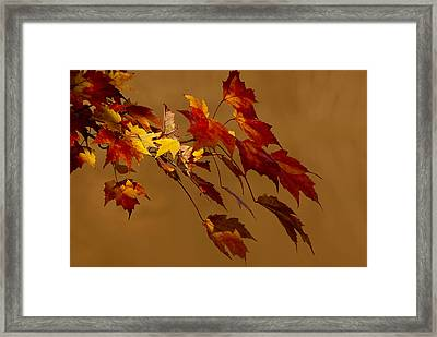 Framed Print featuring the photograph Autumn Leaves by Judy  Johnson