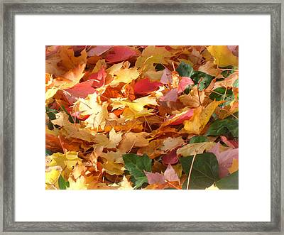 Autumn Leaves Framed Print by Lee Yang