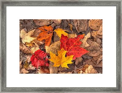 Autumn Leaves Framed Print by Matt Dobson