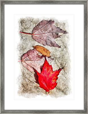 Autumn Leaves On A Rock II Framed Print