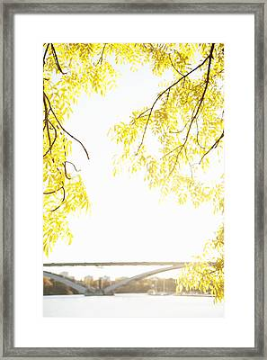 Autumn Leaves On Branch With Bridge In Background, Close-up Framed Print