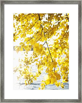 Autumn Leaves On Branch With Lake In Background, Close-up Framed Print
