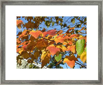 Autumn Leaves Framed Print by Pamela Turner