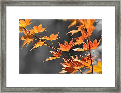 Autumn Leaves  Framed Print by Sandy Fisher
