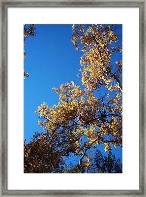 Autumn Leaves Framed Print by Steve Huang