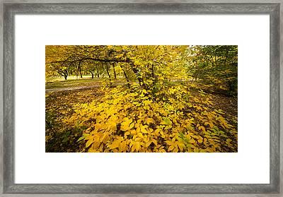 Autumn Leaves Framed Print by Svetlana Sewell