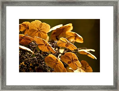 Autumn Light Framed Print by Carolyn Marshall