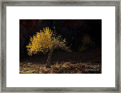 Autumn Light Framed Print by Mike  Dawson