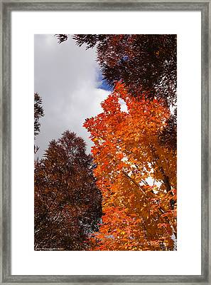 Framed Print featuring the photograph Autumn Looking Up by Mick Anderson