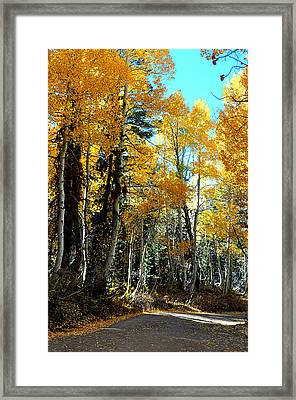 Autumn Magic Framed Print by Lynn Bawden