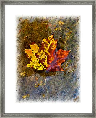 Framed Print featuring the digital art Autumn Maple Leaf In Water by Debbie Portwood