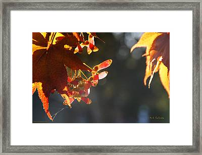 Framed Print featuring the photograph Autumn Maple by Mick Anderson