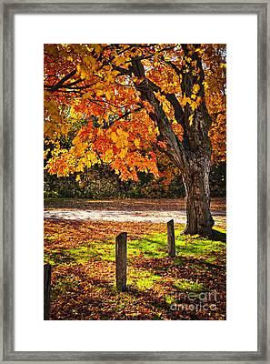 Autumn Maple Tree Near Road Framed Print
