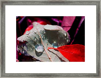 Autumn Menagerie  Framed Print by Marie Jamieson