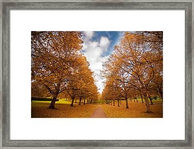 Autumn Framed Print by Micael  Carlsson
