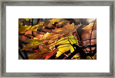 Autumn Morning Framed Print by David Troxel