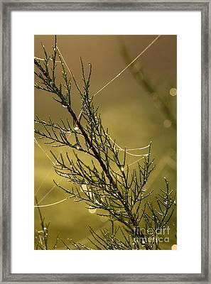 Autumn Morning II Framed Print by Jo
