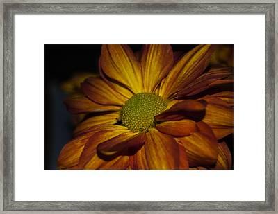 Autumn Mum Framed Print