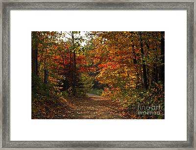 Autumn Nature Trail Framed Print by Cheryl Cencich