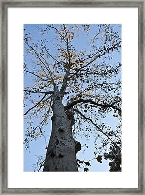 Autumn Oak Framed Print by Bill Cannon