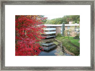 Autumn On Campus Framed Print by Sean Mullally