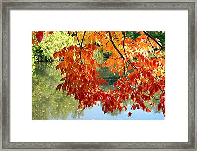 Autumn On The Pond Framed Print