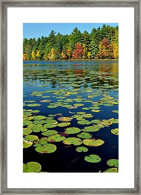 Autumn On The River Framed Print by Rick Frost