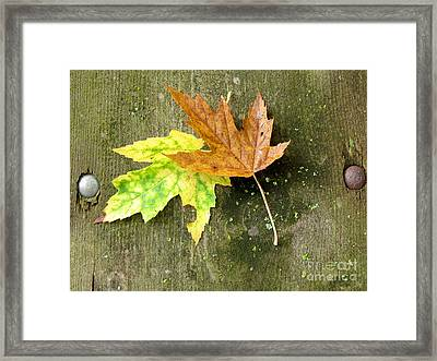 Autumn Pair Framed Print by Marilyn Smith
