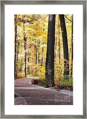 Autumn Path Framed Print