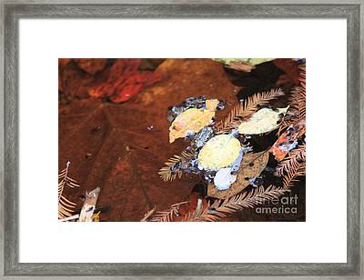 Autumn Pool Framed Print by Nathan Grisham