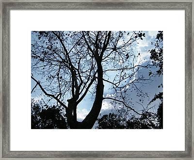 Autumn Framed Print by Prashant Ambastha