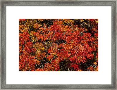 Autumn Red Framed Print by Garry Gay