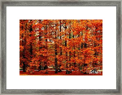 Autumn Red Maple Landscape Framed Print by Carol F Austin