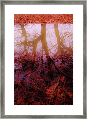 Autumn Reflections  Framed Print by Xoanxo Cespon