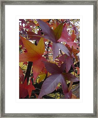 Autumn Rhapsody Framed Print