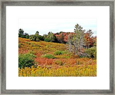 Framed Print featuring the photograph Autumn Riot by Christian Mattison