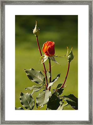 Framed Print featuring the photograph Autumn Rose by Mick Anderson