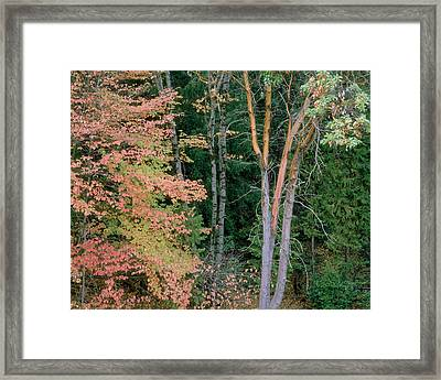 Autumn Scene Framed Print by Mark Greenberg
