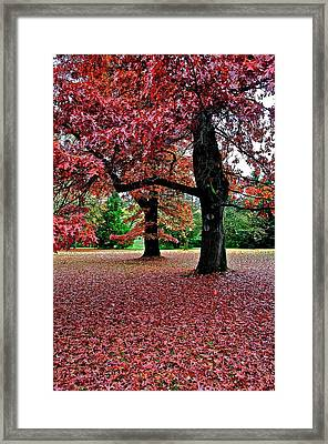 Framed Print featuring the photograph Autumn by Scott Holmes
