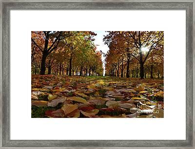 Autumn Sheets Carpet Framed Print