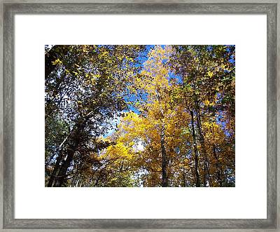 Framed Print featuring the photograph Autumn by Sheila Silverstein