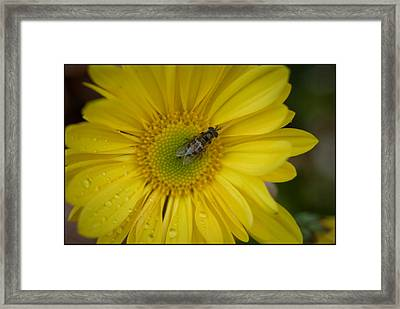 Autumn Shower Framed Print by Kelly Rader