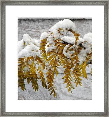 Autumn Snow Framed Print by Michelle Frizzell-Thompson