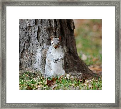 Autumn Squirrel Framed Print