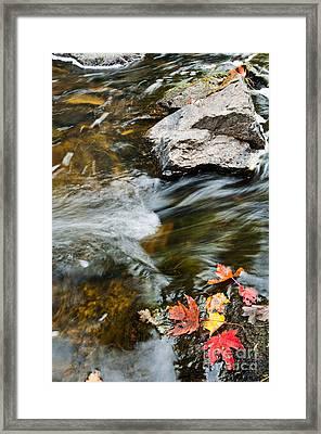Autumn Stream Framed Print by Cheryl Baxter