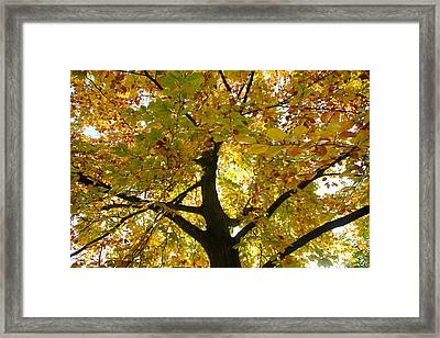 Autumn Sun Framed Print by Karen Grist
